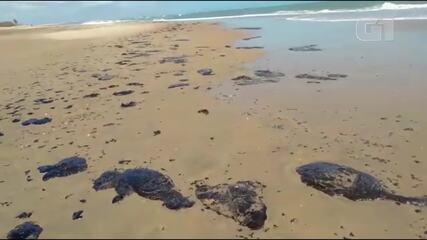 Óleo semelhante a piche é encontrado na Praia do Paracuru