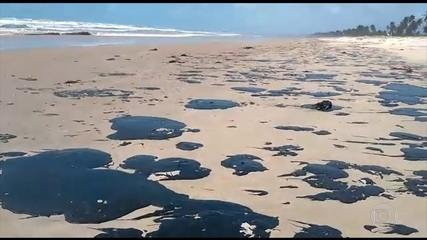 Praias sujas de óleo impedem a soltura dos filhotes de tartaruga em Aracaju