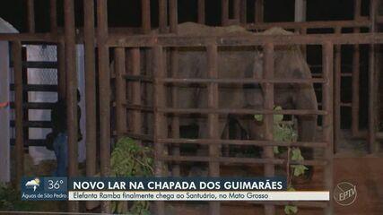 Elefanta Ramba chega a Santuário de Elefantes no Mato Grosso