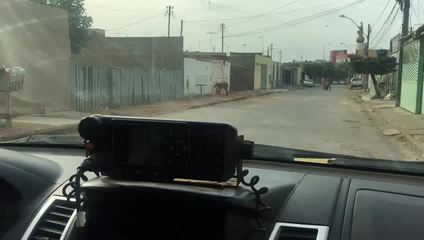 Lobo-guará tenta entrar em residência em Ceilândia, no Distrito Federal