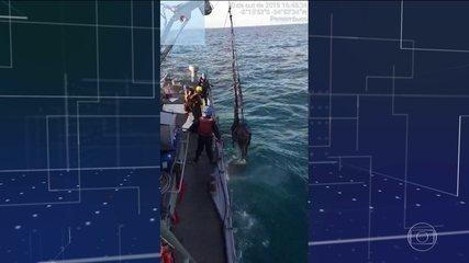 Marinha reforça o monitoramento e a limpeza dos resíduos na costa do Nordeste
