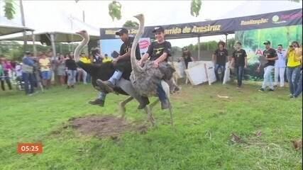 Corrida de avestruz é tradição em cidade de Rondônia