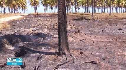 Coqueiral de Maracaípe volta a ser atingido por incêndio no Litoral Sul de Pernambuco