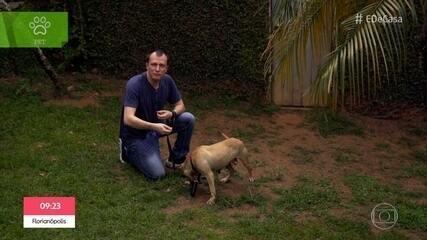 Alexandre Rossi mostra como é a reabilitação de cães de rinha