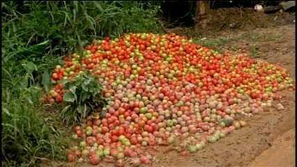 Consumidores podem sentir diferença no preço do quilo do tomate na região de Itapetininga