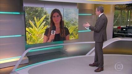 Andréia Sadi comenta negociações em torno do veto ao orçamento impositivo