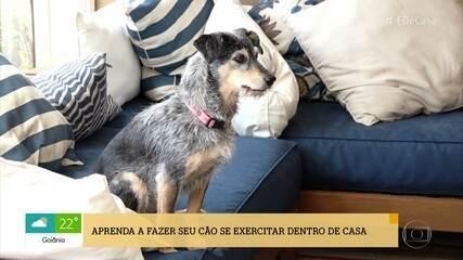 Aprenda a fazer seu cão se exercitar dentro de casa