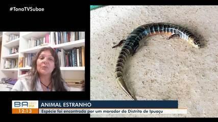 Animal reptiliano desconhecido é encontrado na zona rural de Feira de Santana