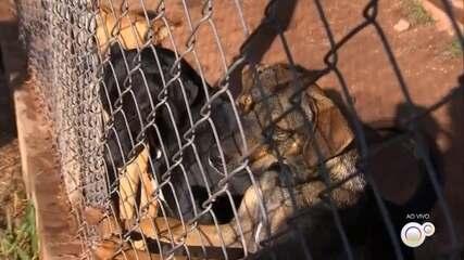 Jundiaí tem queda de adoções de animais no mês de abril