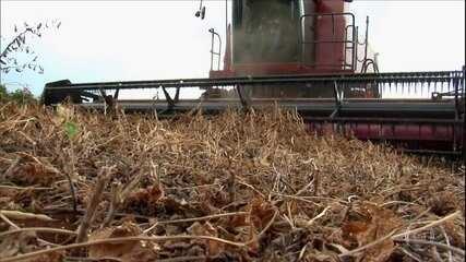 Globo Rural: alta temperatura e falta de chuvas prejudicam produção de feijão no Paraná