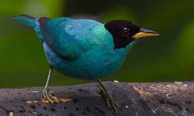 Colômbia é um paraíso para observação de aves
