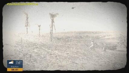 Região de Ijuí já registrou cinco episódios de nuvem de gafanhotos em 50 anos
