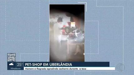 Ministério Público investiga caso de cachorro agredido em Uberlândia