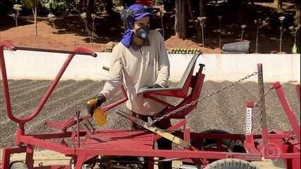 Colheita do café no Sul de Minas segue cuidados para evitar o coronavírus