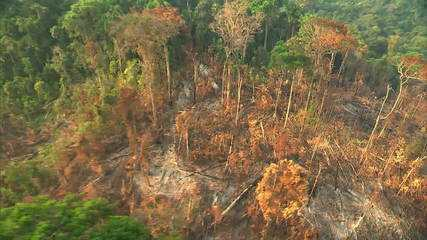 'A floresta é um dos nossos maiores ativos', diz professora da Coppe/UFRJ