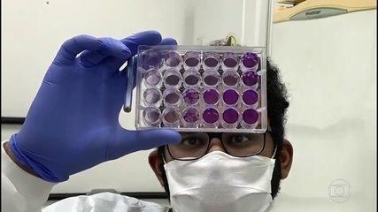 Jovens cientistas do Brasil atuam em forças-tarefas contra a pandemia