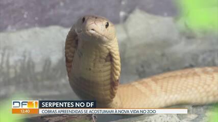 Naja no DF: cobra virou meme nas redes sociais