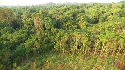 Servidores do Ibama estimam que desmatamento na Amazônia pode aumentar quase 30% em 2020