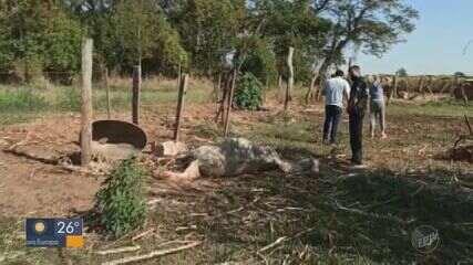 Em Pirassununga, 22 animais são encontrados em péssimas condições sanitárias