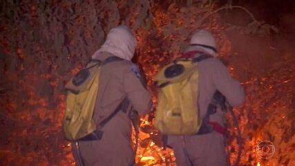 Incêndio no Pantanal de Mato Grosso já destruiu mais de 60 mil hectares de vegetação