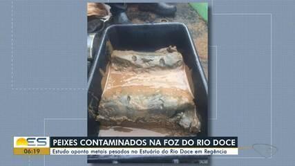 Estudo apontou metais pesados no estuário do Rio Doce em Linhares