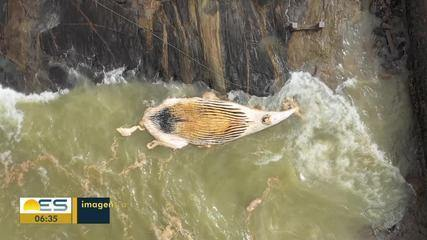 Baleias apareceram mortas no ES durante o final de semana