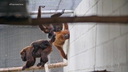 Exclusivo: Fantástico revela rotina cruel de um dos maiores traficantes de animais do país