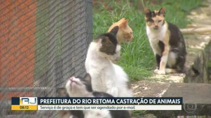 Prefeitura do Rio retoma serviço de castração de animais