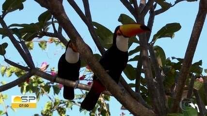 Flagra de tucanos na capital