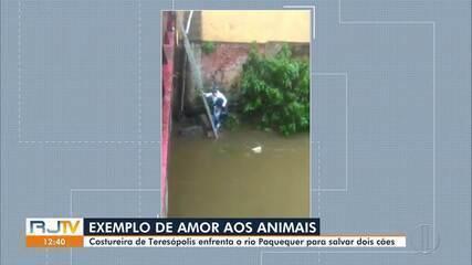 Inter TV encontra costureira que salvou dois cães no rio Paquequer, em Teresópolis, no RJ