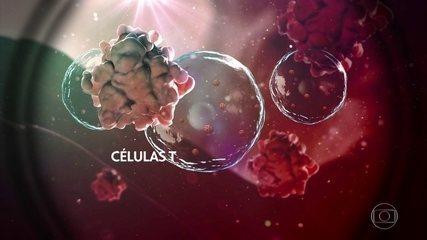 Pesquisadores estudam a memória imunológica contra o vírus da Covid-19