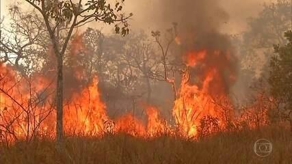 Avanço das queimadas afasta investidores estrangeiros, alertam especialistas