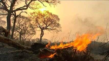André Trigueiro: '12% do bioma do Pantanal já virou cinza'