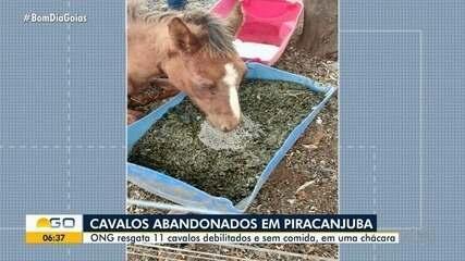 ONG resgata 11 cavalos que sofriam maus-tratos em chácara de Piracanjuba