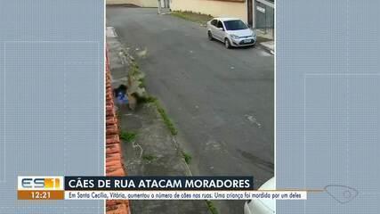Cães de rua atacam moradores de bairro de Vitória