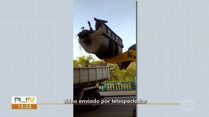 Remoção de cavalo que sobreviveu a atropelamento repercute em Barra do Piraí