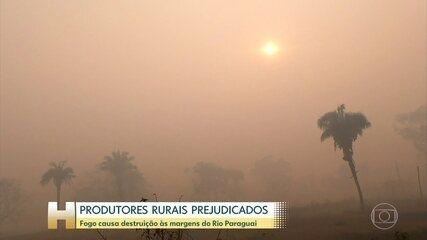 Queimadas no Pantanal destroem a vegetação, a fauna e provocam muita fumaça