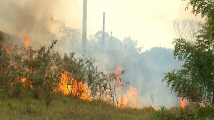 Polícia vai penalizar responsável por queimada na Estação Ecológica de Bauru