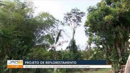 Projeto de Reflorestamento