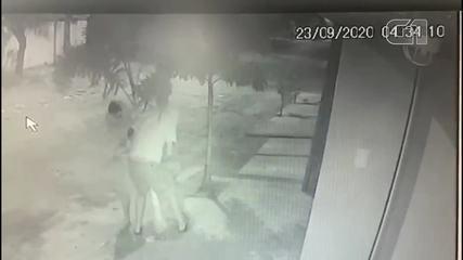 Homens são flagrados arrancando palmeiras avaliadas em R$ 250 de residência na Sapiranga
