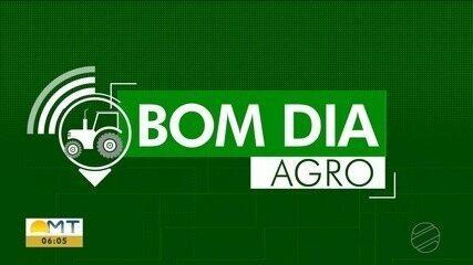 Fumaça prejudica apiários e a produção de mel deve ser menor em Mato Grosso