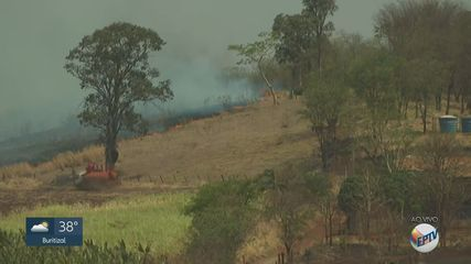 Incêndio atinge mata próxima a rodovias na região de Ribeirão Preto