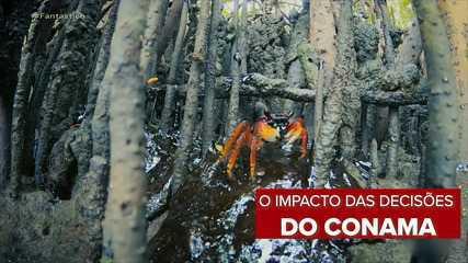 Especialistas e instituições comentam decisão do Conama e prejuízos para o meio ambiente