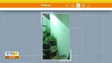 Policiais encontraram uma plantação de maconha em uma casa na Serra