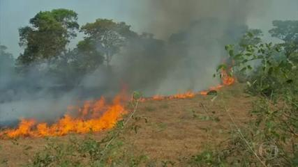 Pantanal bate recorde de focos de incêndio em setembro