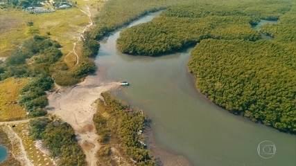 Restingas e manguezais: entenda polêmica decisão de revogar regras de proteção
