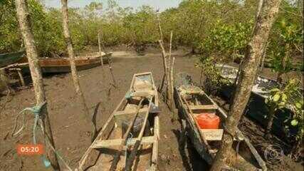 Entenda a importância das restingas e manguezais na biodiversidade
