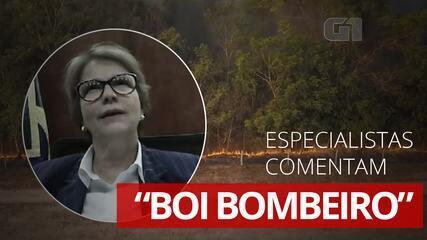 """Especialistas comentam fala da ministra da Agricultura sobre """"boi bombeiro"""""""