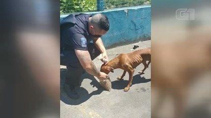 Cachorra perdida em mata é resgatada por guardas em Praia Grande, SP