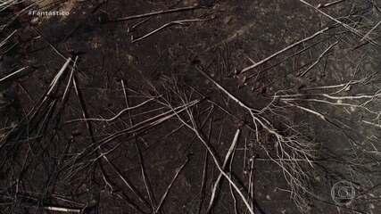 Número de focos de queimadas no Amazonas bate recorde
